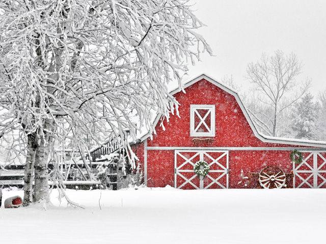 54ebb4ff56fcd_-_bring-outside-in-barn-1214-lgn